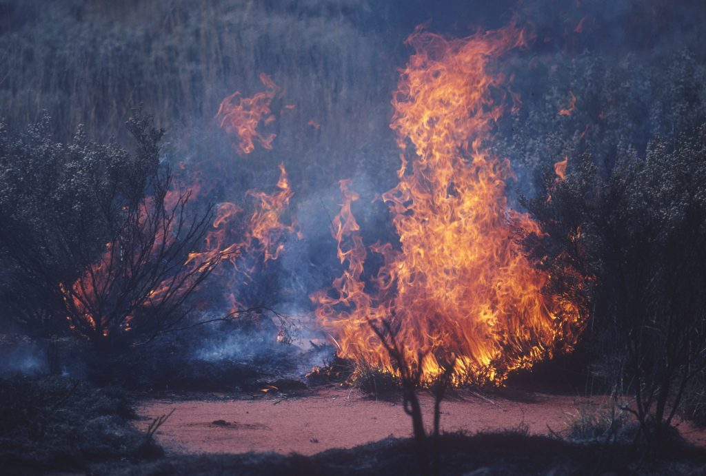individual bushes on fire